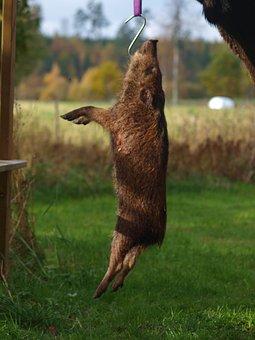 Boar, Hunting, Pigs, Hunter, Pray, Dead, Expensive