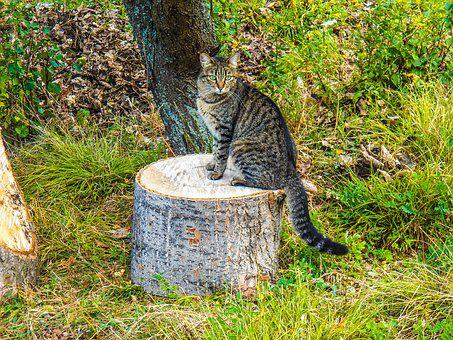 Cat, Animals, Kitty, Outdoor, Introduction, Seating
