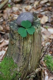 Lucky Clover, Forest, Lucky Stone, Tree Stump, Nature
