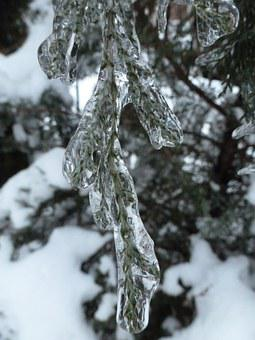 Ice, Juniper, Winter, Frozen, Encased, Macro, Branch