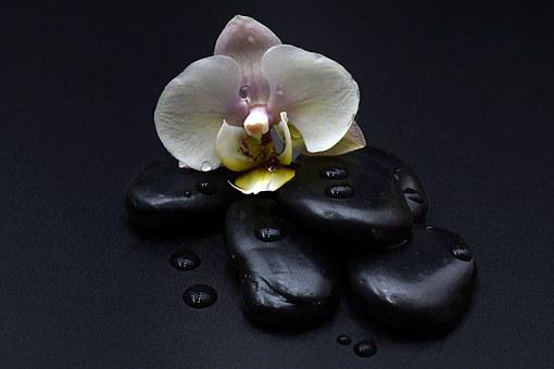 Stones, Black, Orchid, Orchid Flower, Drop Of Water