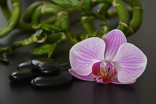 Stones, Black, Orchid, Orchid Flower, Bamboo