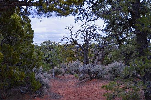 Desert, Trees, Scrub Brush, Landscape, Arid, Sky