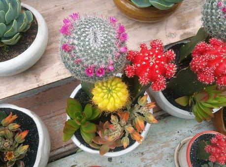 Cactus, Stone Lotus, The Birthday Cake, Dalat, Clay Pit