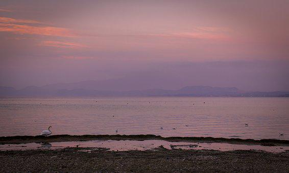 Sunset, Lake, Landscape, Winter, Water, Italy, Swan