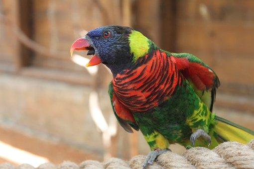Parrot, Animal, Red, Bird, Birds, Feather, Blue, Yellow