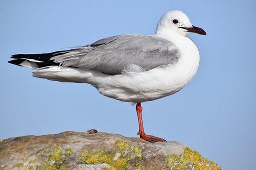 Bird, Seagulls, Wildlife, Nature, Animal, Flight