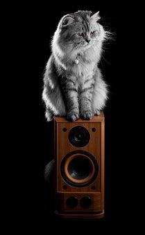 Cat, Animal, Pet, Golden Eyes, Kitten, Feline