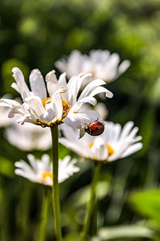 Beetle, Beetles, Insect, Macro, Nature, Red, Colorful