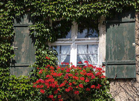 Window, Hauswand, Ivy, Climber, Geranium, Flowers, Wall