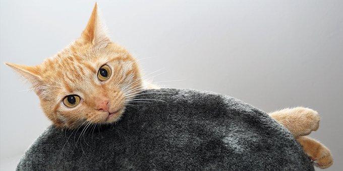 Cat, Pet, Animal, Cat's Eyes, Cute, Kitten, Cat Face