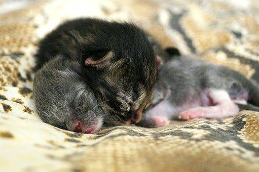 Kittens, Animals, Cute, Little, Charming