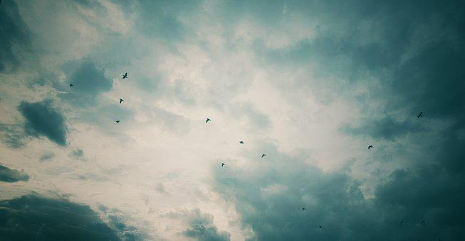 Clouds, Sunset, Birds, Flock Of Birds, Nature, Blue