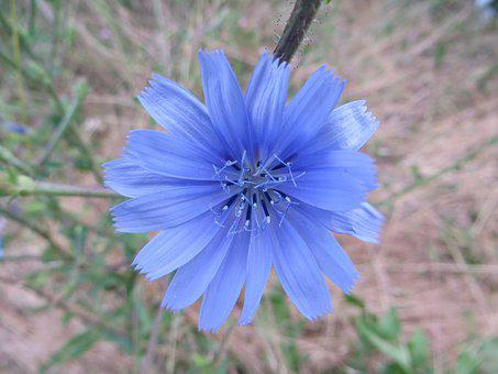 Flower, Blue, Green, Nature, Landscape, Botany