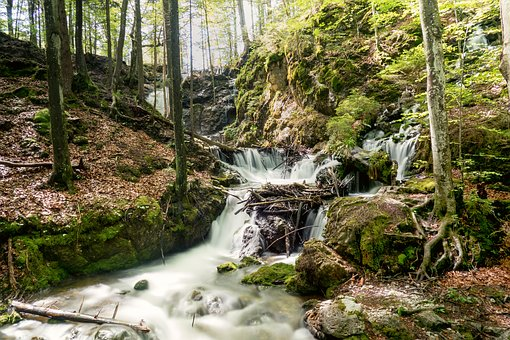 Bach, River, Nature, Wet, Forest, Scenic, Waterfall