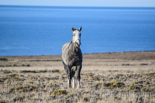 Equine, Wild, Nature, Sea, Freedom