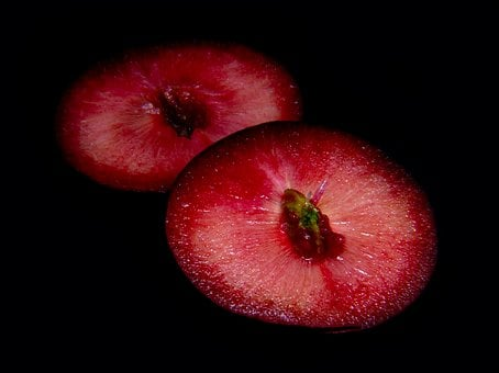 Plum, Slice, Seed, Half, Ripe, Red, Sweet, Fruit