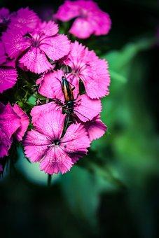Flowers, Flower, Nature, Bloom, Garden, Pink, Summer