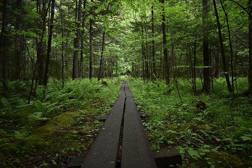 Hike, Trail, Bridge, Nature, Hiking, Landscape, Forest