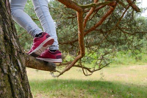 Climbing, Tree, Climb, Human, Trees, People, Girl