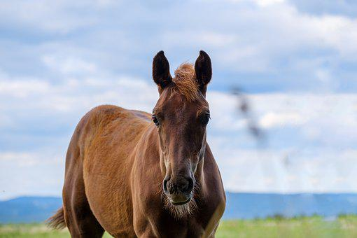 Horse, Mare, Pasture, Coupling, Animal, Livestock