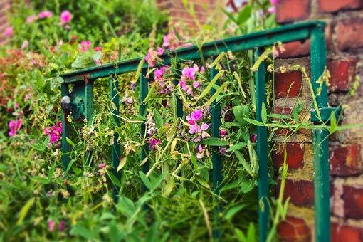 Garden Gate, Goal, Input, Garden, Door, Old, Nature