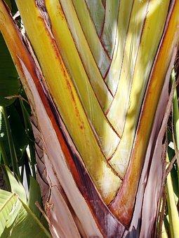 Petioles, Nesting, Tree, Flat Palm, Texture, Color