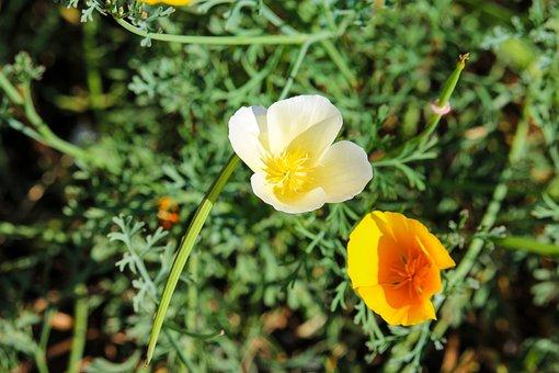 Color, Flower, Flora, Orange, Yellow, Colorful, Summer