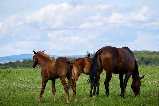 Horse, Mare, Foal, Pasture, Coupling, Animal, Livestock