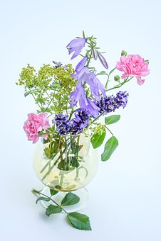 Quiet Summer Life Flower, Edelweiss, Rose Rosé