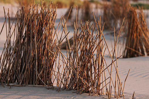 Grass, Halme, Reed, Beach Grass, Dune, Sand