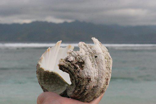 Shell, Sea, Beach, Tropical, Template, Background, Life
