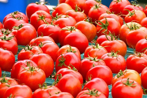 Tomatoes, Harvested Tomatoes, Fresh Tomatoes
