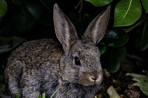 Rabbit, Bunny, Hare, Nature, Wildlife, Mammal, Animal