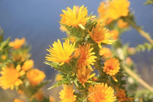 Flower, Macro, Yellow, Nature, Summer, Bokeh