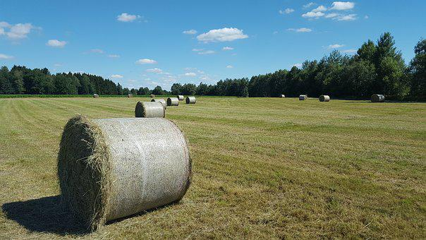 Agriculture, Landscape, Hay, Graze, Grass, Land, Sky