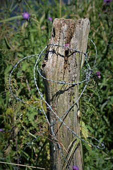 Log, Barbed Wire, Wiring, Close Up, Fixing, Nail