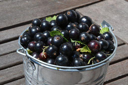 Black Currants, Fruit, Healthy, Summer, Bio, Delicious