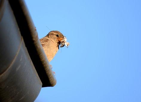 Bird, Sparrow, Roof, Feeding, Insect, Bill, Songbird