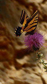 Butterfly, Wings, Summer, Colorful, Delicate, Nature