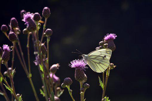 Butterfly, Flowers, Nature, Insect, Summer, Close Up