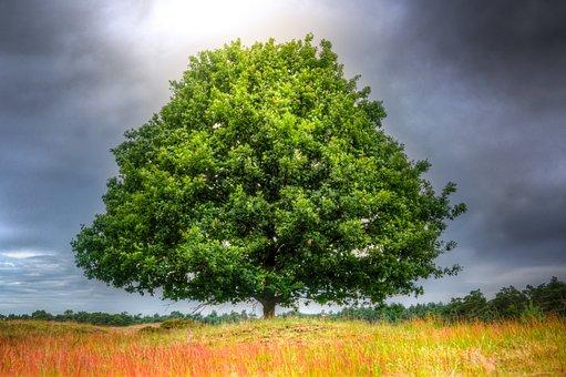 Oak, Alone, Wood, Ground, Pead, Sky, Clouds, Nature