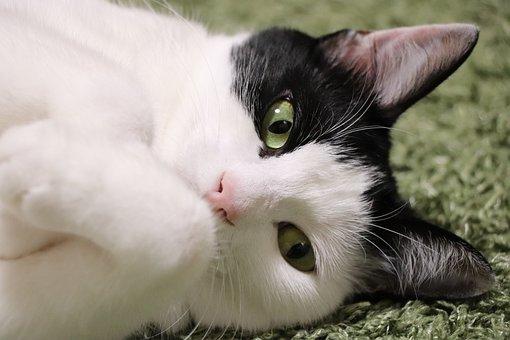 Cat, Pet, Predators, The World Of Animals, Cute