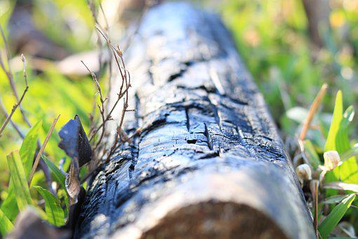 Firewood, Trunk Burned, Tree, Nature, Wood, Ash, Trunk