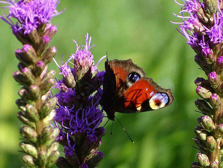 Butterfly, Nature, Close Up, Wing, Garden, Insect