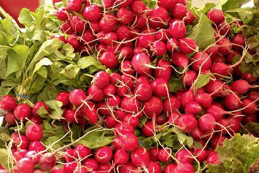 Harvested Fresh Radishes, Fresh Radishes, Radishes