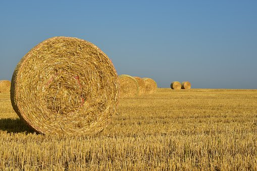 Hay, Straw, Harvest, Rural, Agriculture, Nature, Field
