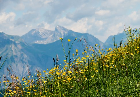 Hochjoch, Mountains, Mountain Summer, Montafon, Distant