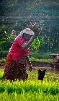 Kerala, Outdoor, Cultivating, India, Green, Farmland