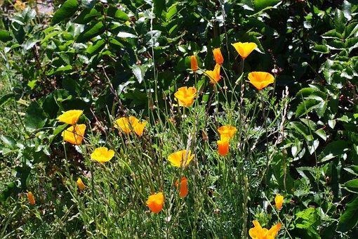 Flowers, Yellow, Nature, Summer, Flora, Landscape